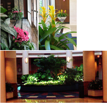 Tropical Design Inc A Interior Landscape Design Company Nashville Franklin And